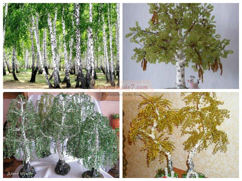 Выращивание дихондры дома 95