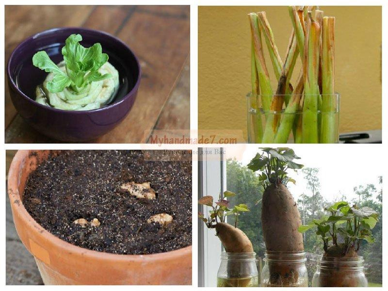 13 овощей, которые вы можете вырастить дома