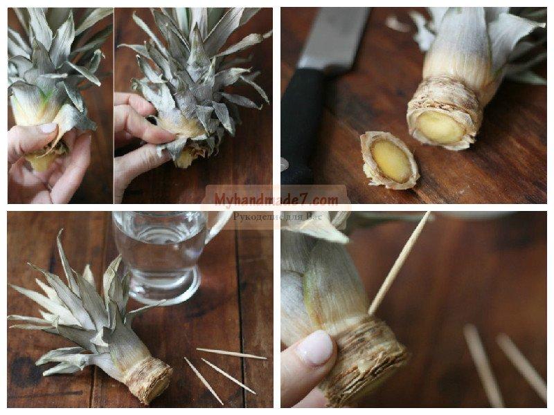 Как вырастить ананас дома?