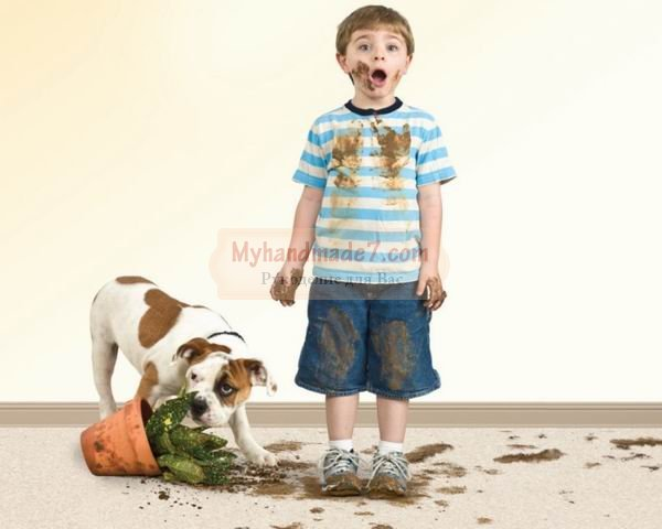 Почему невозможно осуществить химчистку ковра дома?
